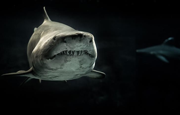 Der Sound-Computer und die Hai-Haut